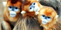 삼성에버랜드, '온라인 동물원' 오픈