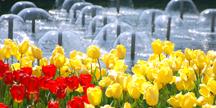 에버랜드, 설명이 필요없는 아름다운 꽃 「튤립축제」 오픈