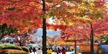 에버랜드, 4色 단풍 코스에서 가을 사색(思索)