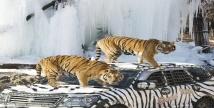 에버랜드 동물원, '겨울왕국'으로 변신