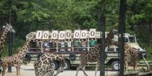 수륙양용차 타고 체험하는 생태형 사파리 '로스트밸리' 에버랜드, 최단기간 1,000만명 돌파 '신기록'