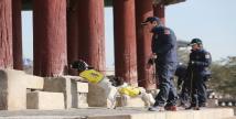 흰개미탐지견, 경기도에서 올해 첫 활동 나서