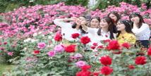 꽃의 여왕! 에버랜드 '장미 축제' 18일 오픈
