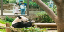 에버랜드, 여름방학 '동물 탐험 프로그램' 오픈