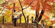 가을 정취 물씬! 에버랜드는 울긋불긋 단풍 천국