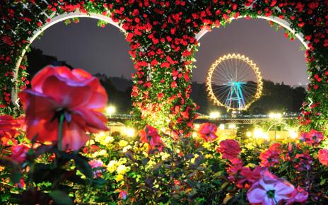 Rose Festival